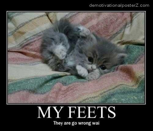MY FEETS - THEY ARE GO WRONG WAI kitten