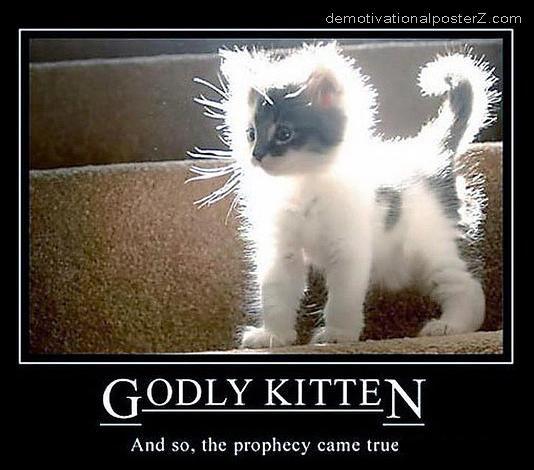 Godly kitten