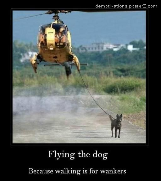 walking the dog in a helicopter flying