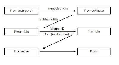 Blog siswa proses pembekuan darah dari uraian tersebut secara ringkas dapat disimpulkan bahwa untuk proses pembekuan darah diperlukan trombokinase ca vitamin k protrombin ccuart Images