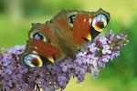 plná motýlů