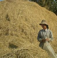 women in Cambodia