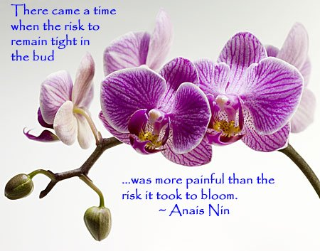 [orchid-Anais-Nin.jpg]