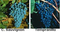 Uvas+Atrium+cabernet+Sauvignon.bmp