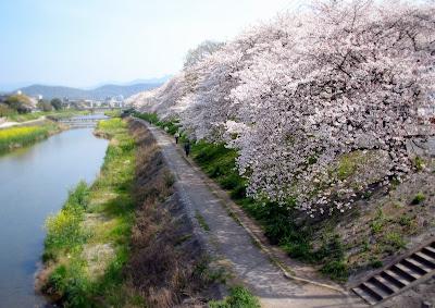 桜の画像 p1_3