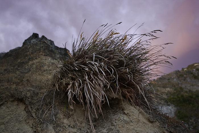 Coastal grass clump