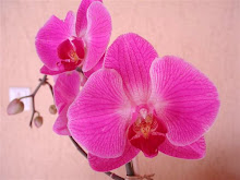MFS loves orquideas