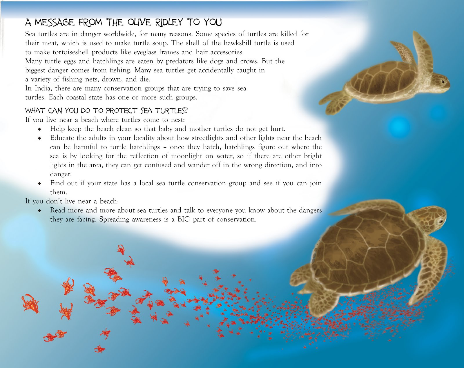 the world on a turtles back essay Write an essay in which you compare and contrast the earth on turtle's back, when grizzlies walked upright  unit 1 essay test zohra sayani the world the.