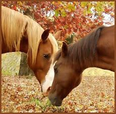 Encontro com ternura entre cavalos