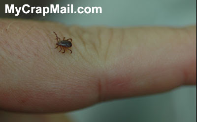 Safe removal of ticks - true or not