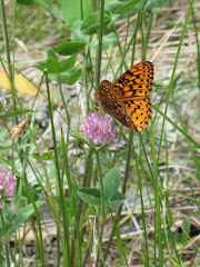 Butterfly At Vallecito Reservoir