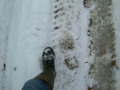 Footsteps In Snows Of Time >> Milkweed & Teasel: Snow Business