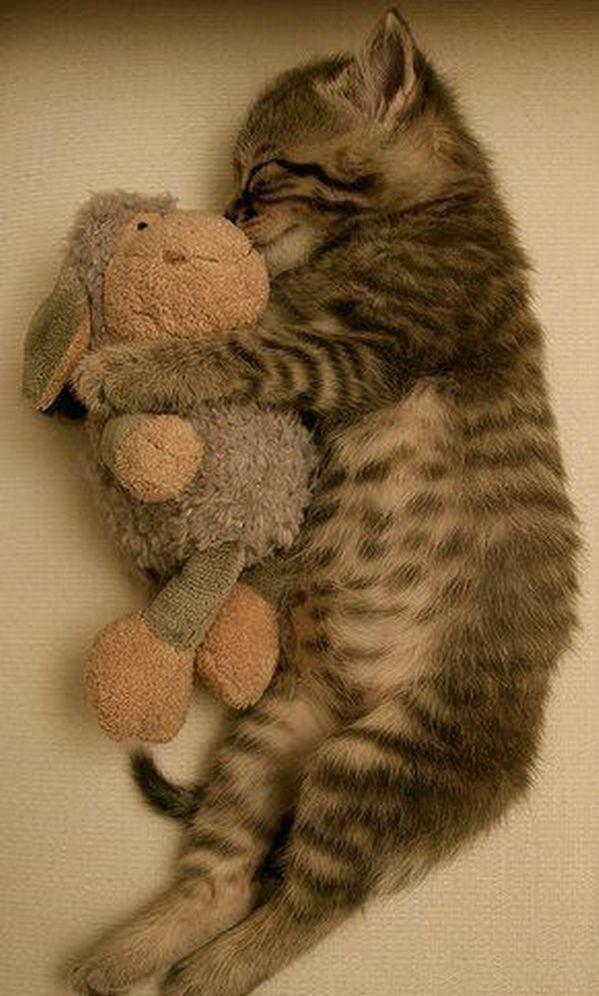 猫好き必見 かわいい子猫が可愛すぎる厳選した