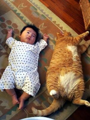 Meraklı sahne kedi Çocuk ile uyur - 4Pics