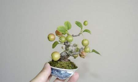 The beauty of bonsai trees: 30Pics