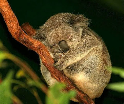 cute sleeping animal
