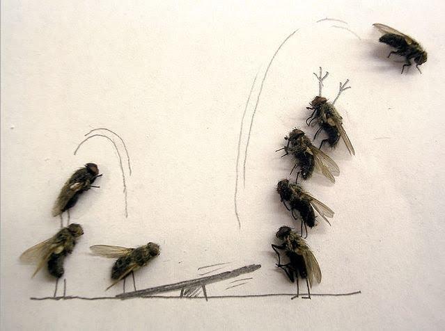 [dead-fly-art-10.jpg]