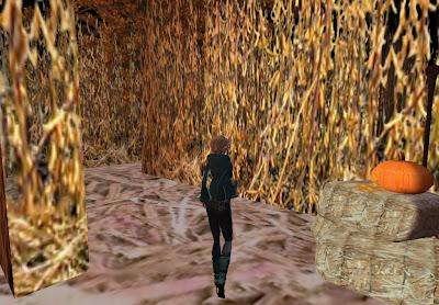 Blonde corn maze