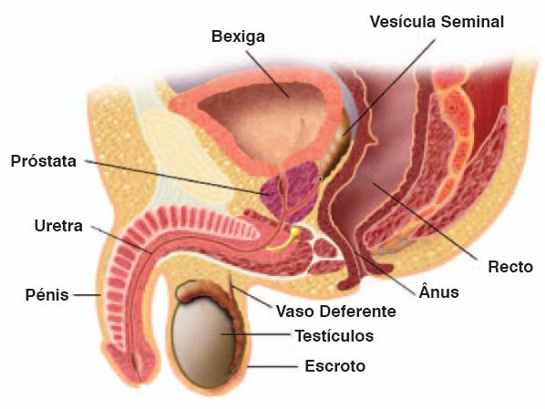 Operação no momento do nascimento no membro