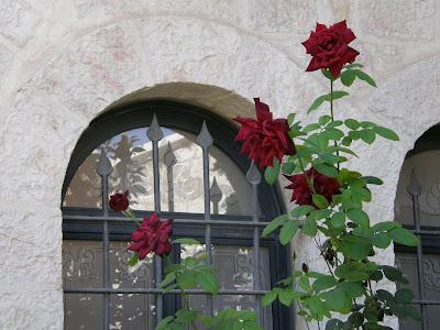 חלון ופרח ורד