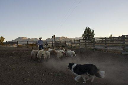 DeltaBluez Stockdogs: ...