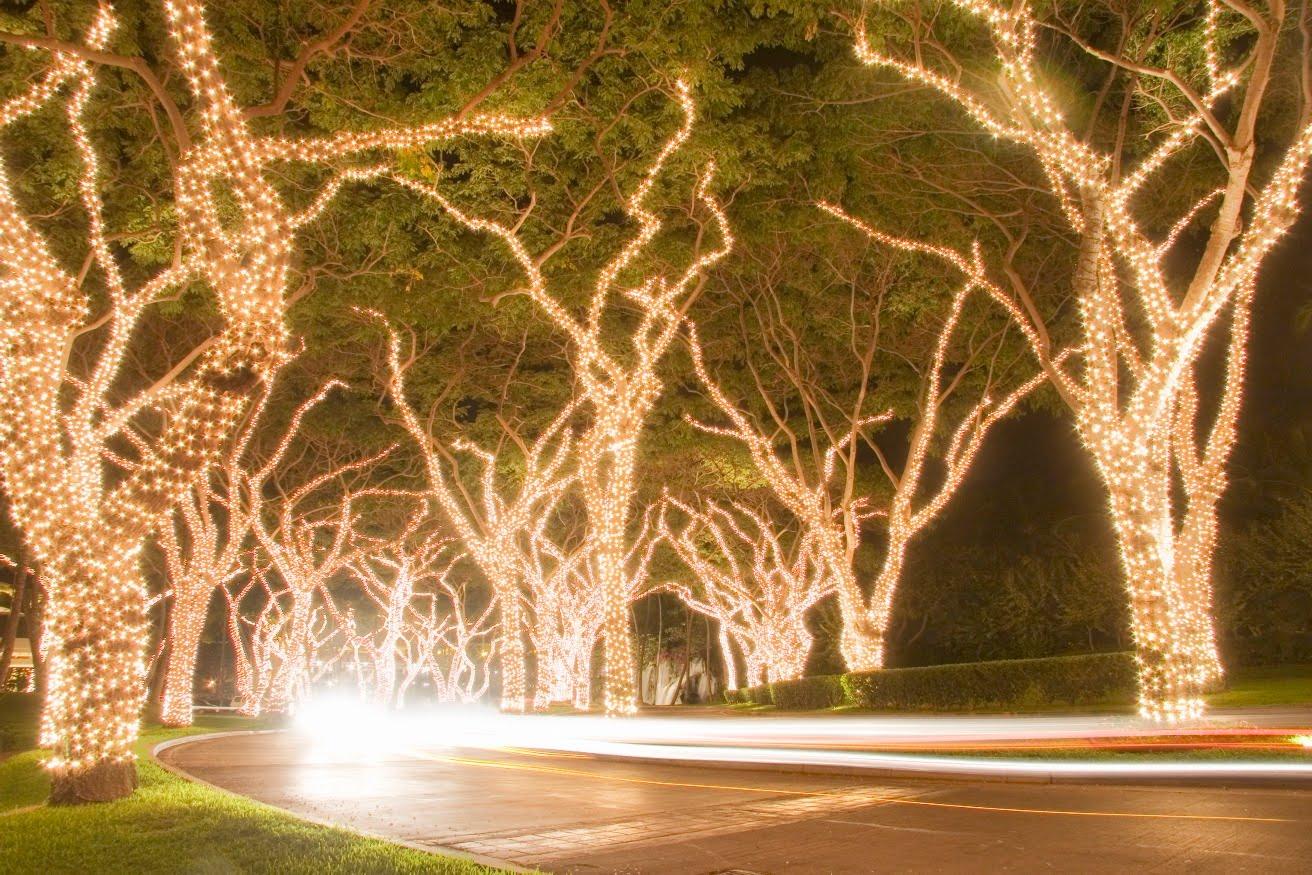 Tree Outdoor Fairy Lights All Home Design Ideas. Hunter Haus
