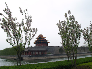 Cherry blossoms and the Forbidden City