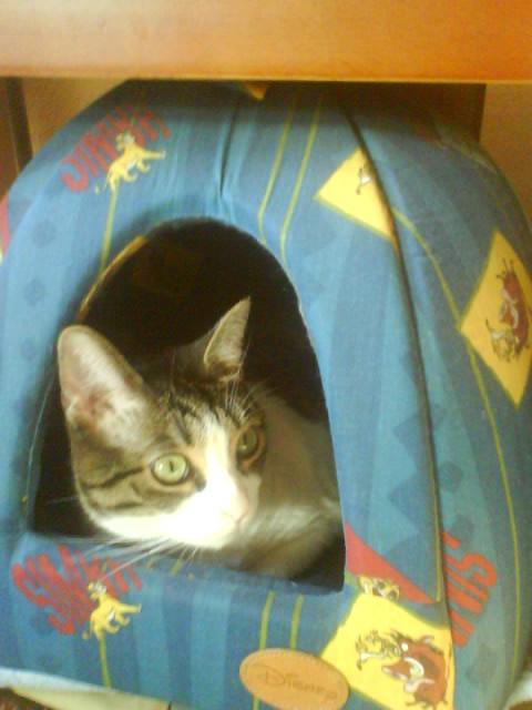 Bergie en su iglú