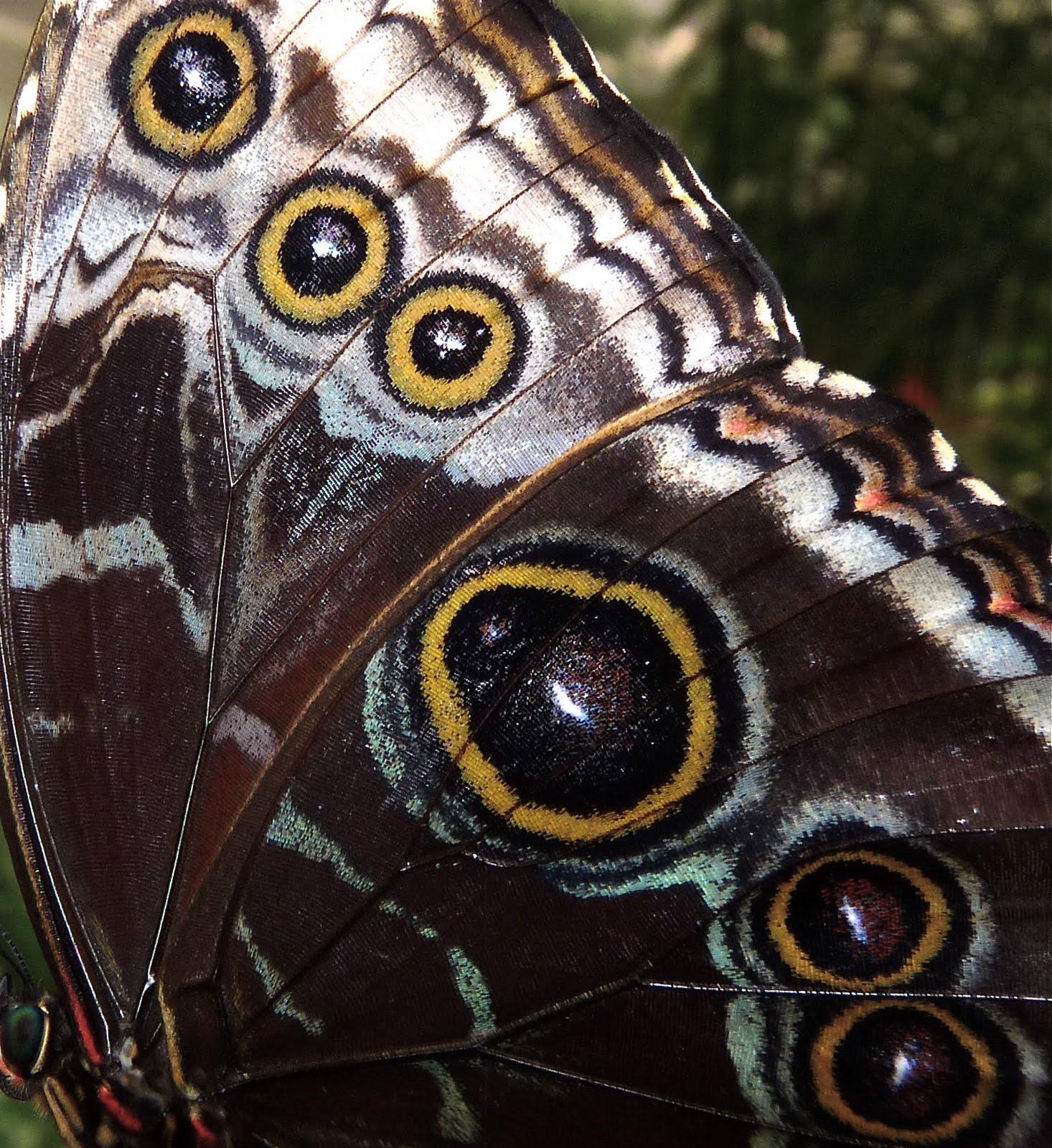 il nostro nord del mondo: Attraversamenti: in attesa farfalle ...