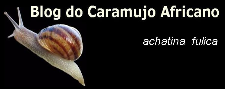 Blog do Caramujo Africano