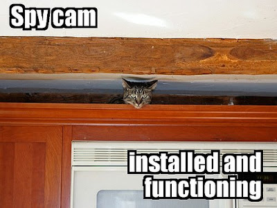 funny cat picture - funny cat pictures-olcat39