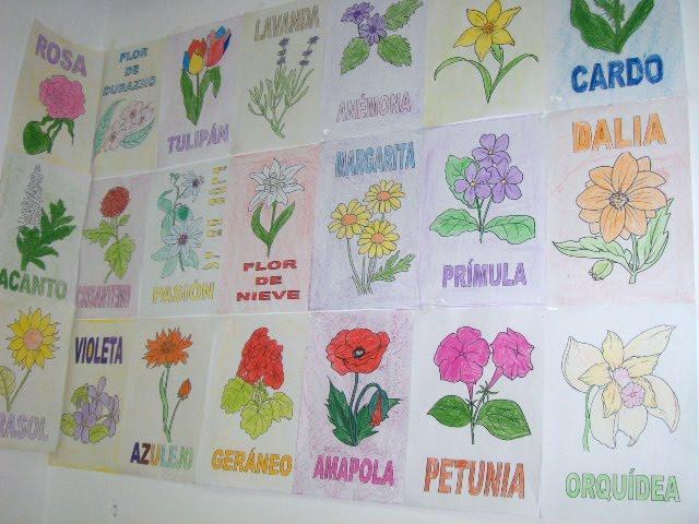 In s las plantas - Clase de flores y sus nombres ...