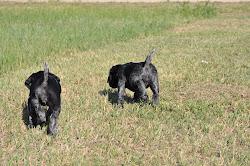 D- Litter puppies