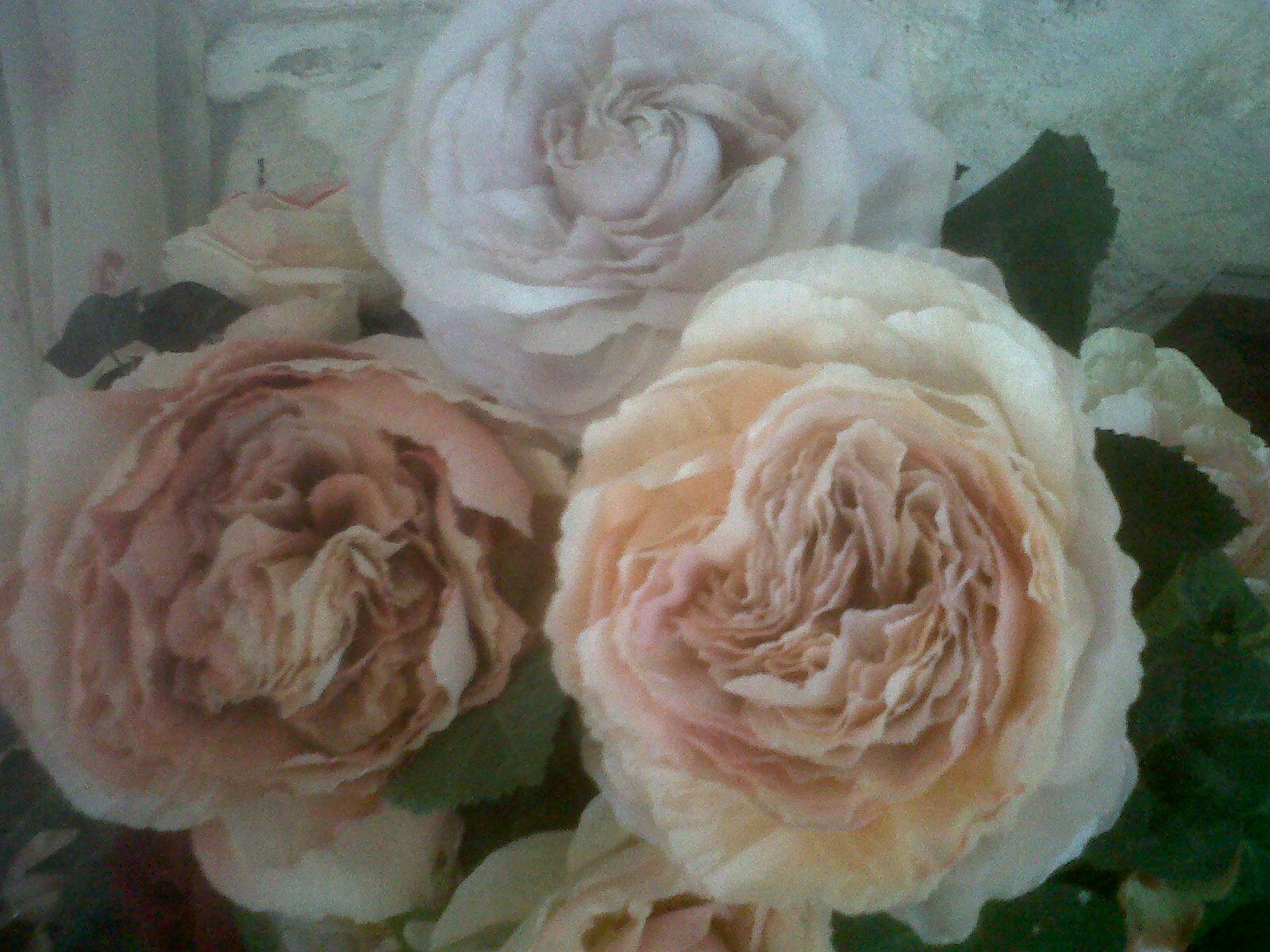 roses pour toujours des roses en papier en automne. Black Bedroom Furniture Sets. Home Design Ideas