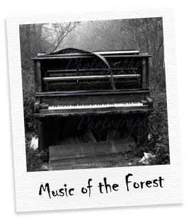 music of the forest
