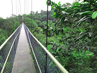 Tree Top Walk - MacRitchie Park
