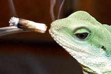 Legalize Medical Cannabis