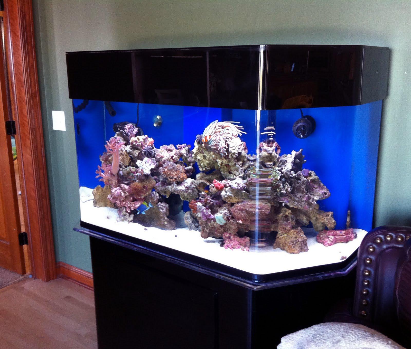 150 Gallon Saltwater Aquarium