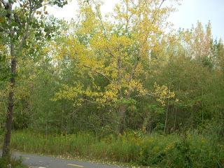Un arbol con hojas amarillas por el otoño