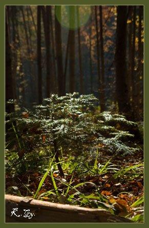 Fotosinteză