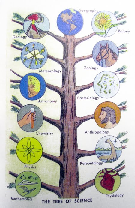branches of science Physical science: history of three scientific fields that study the inorganic world: astronomy, chemistry, and physics.