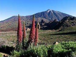The World Heritage teide
