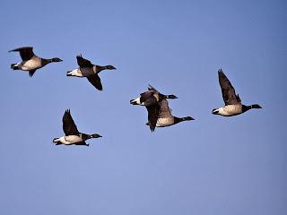 http://4.bp.blogspot.com/_bBqysXGhPys/Sr9ARVHdNXI/AAAAAAAAAmc/HPYSsopLeFI/s320/migratory+birds+2.JPG