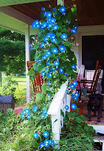 Back Porch Summer 08