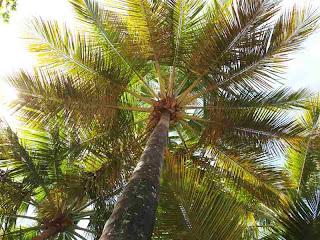 Een dak van palmbomen