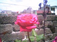 Si puede crecer una flor en medio de la ciudad.