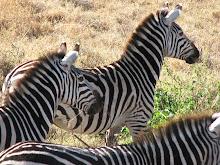 Tanzania 1.2: Ngorongoro Crater, October, 2006