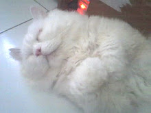 BIANCOCUPIDO: Cara Merawat Bulu Kucing
