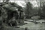 Fontainebleau, la Esencia