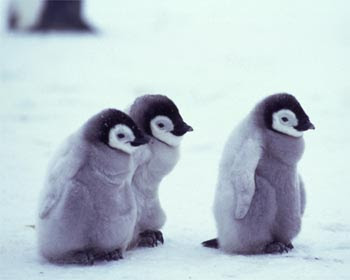 Gledwood Vol 2 (Main blog): Penguins